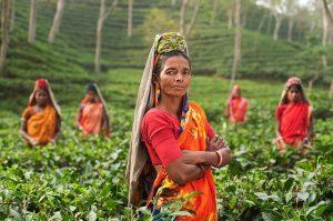 indian women working in fields