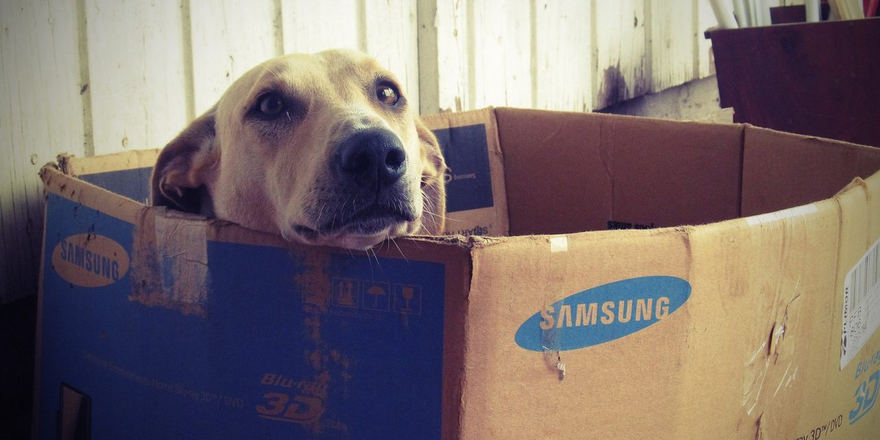 Best Dog Cameras For When You Are Away