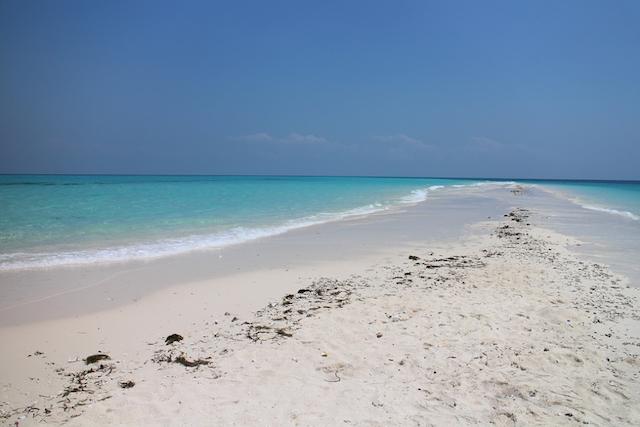 beach with clear blue water in Zanzibar