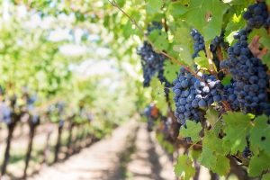An Insider's Review of Paso Robles Wineries