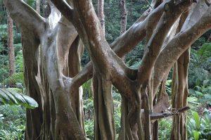 jungles of barbados for honeymooners