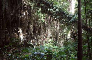 jungle for honeymooners in barbados